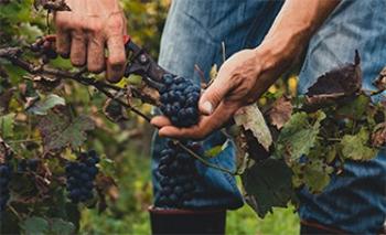 Depreciation for wineries